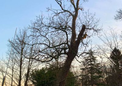 Cheap tree surgeon services in Leeds