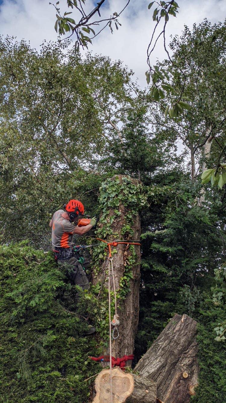Tree surgeon services in Leeds