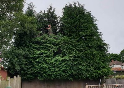 Hedge cutting services in Leeds